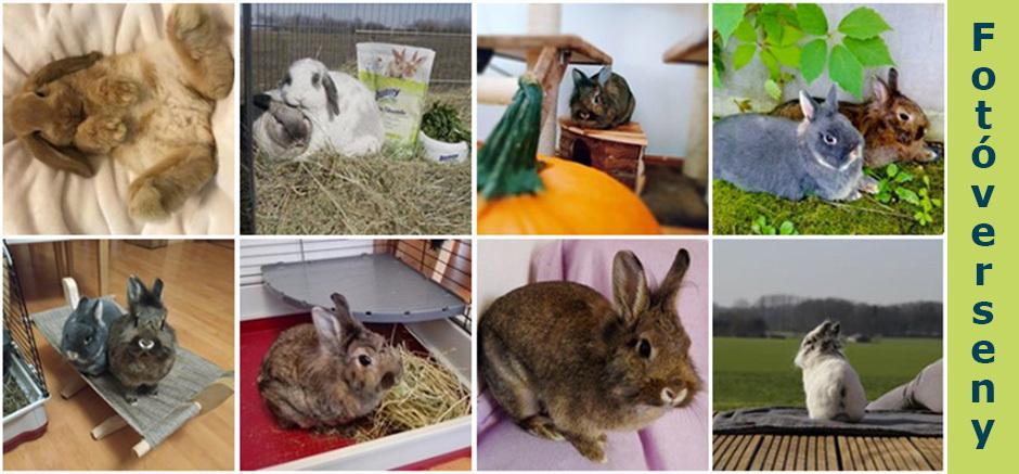 bunnyNature fotóverseny - 2019