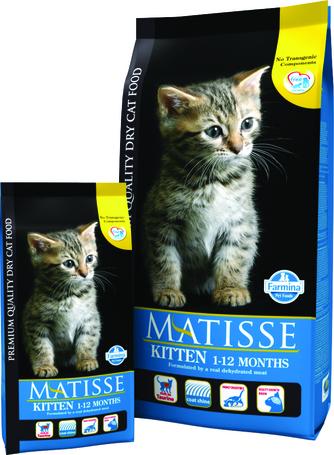 Matisse Kitten kölyökmacskáknak