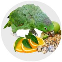 Gyógyhatású készítmények madaraknak