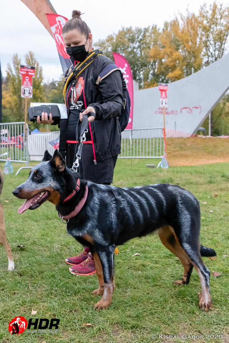 Kutya Halloween