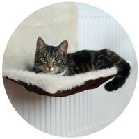 Radiátorra akasztható cica fekhelyek