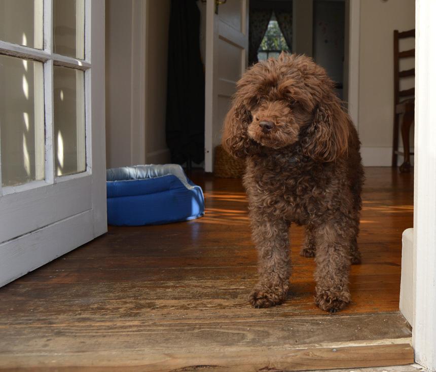 Hogyan tartsunk kutyát a lakásban