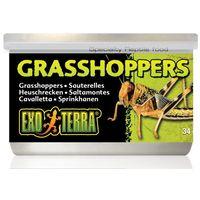 Exo Terra Grasshoppers – Puhára főzött kis szöcskék hüllőknek