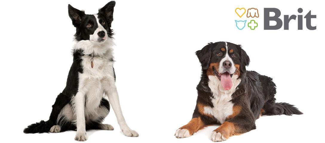 Brit kutyatápok