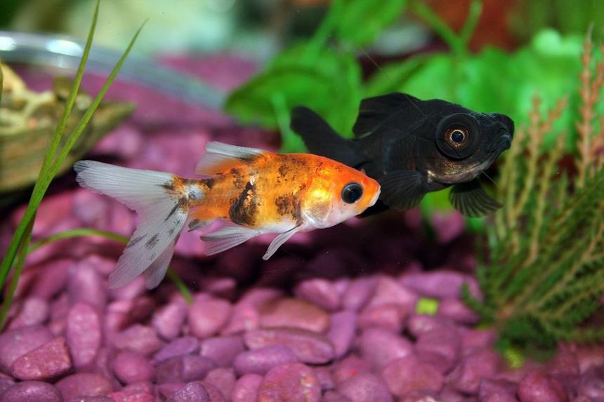 Dekor kavics akvárium aljzat