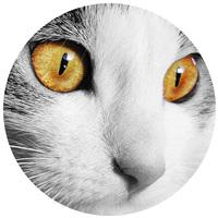 Szemkörnyék ápolók macskáknak