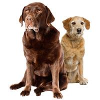 Tápok idős kutyáknak