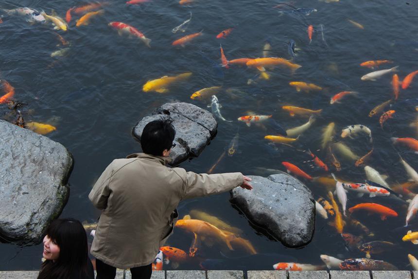 Koi pontyok Nagaszakiban a Glover Gardenben - Fotó: Japanexperterna - Wkipédia - CC-BY-SA-3.0