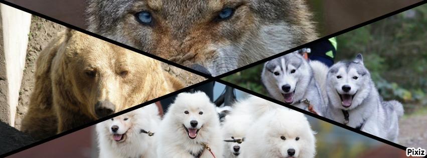 Medve kupa kutyás futó, kutyafogathajtó, kutyás kerékpáros és dogscooter verseny