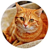 Ivartalanított macskáknak