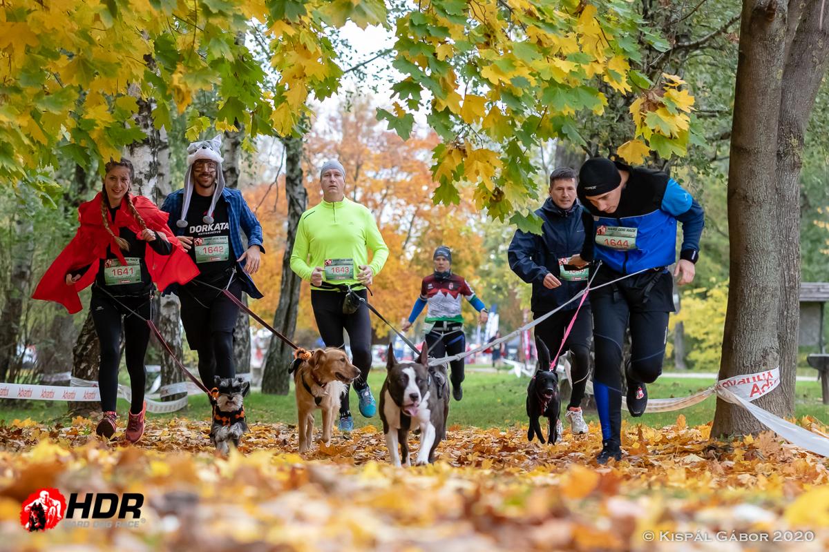 Futás a természetben kutyával