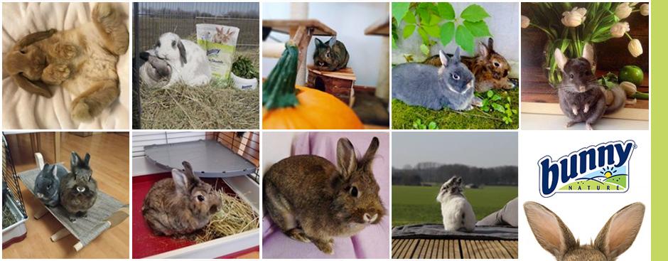 bunnyNature fotóverseny kisállatoknak