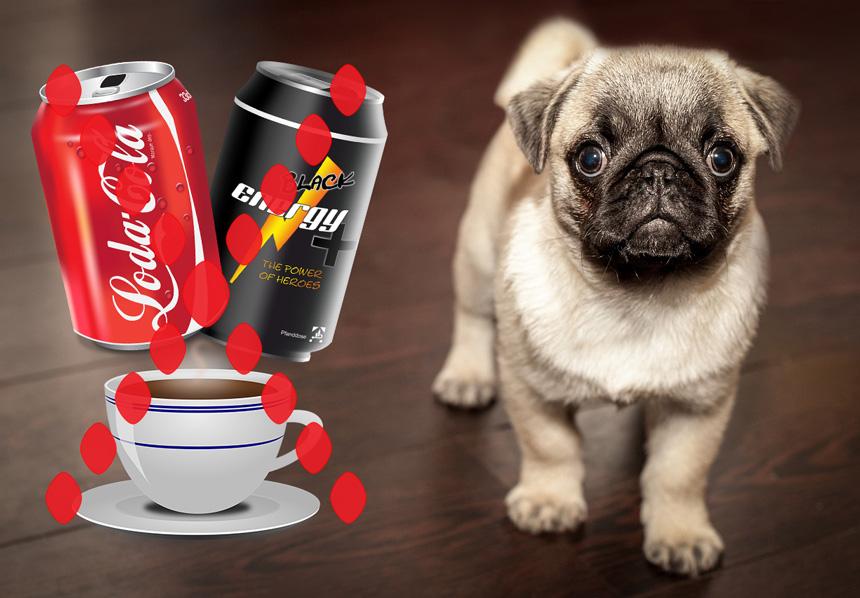 A kávé, kóla és energiaital kerülendő kutyáknál