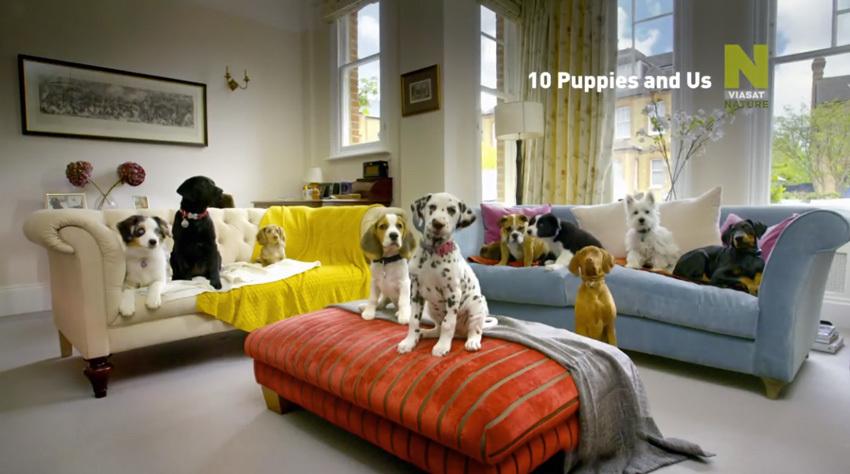 10 kutyus es mi   Fotó