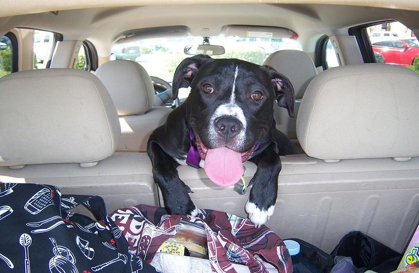Kutya utazásra készül