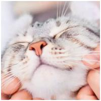Vitakraft termékek macskáknak