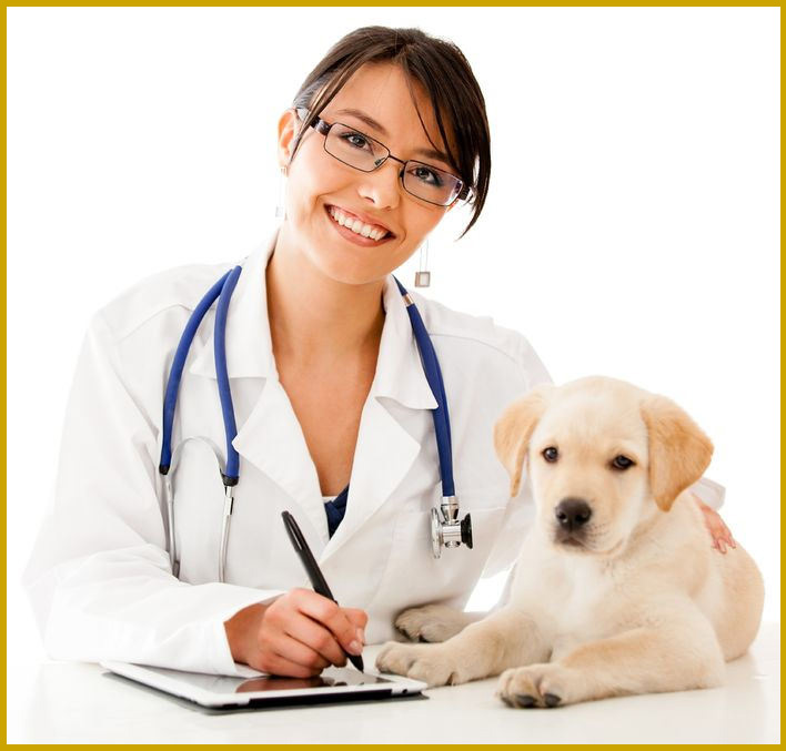 A kutyák segíthetik a betegséből való felépülést