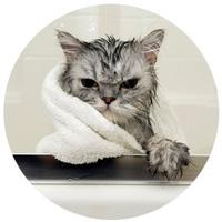 Bolhairtó és -riasztó samponok cicáknak