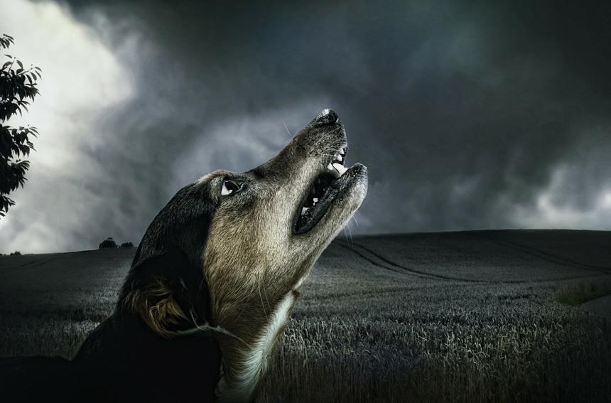Kutya vihar előtt