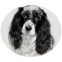 Bolhairtó és -riasztó kutyasamponok